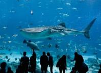El mayor acuario del mundo. Impresionante.