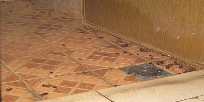 Los 10 escondites favoritos de las cucarachas te atreves a conocerlos supercurioso - Por donde salen las cucarachas en el cuarto de bano ...