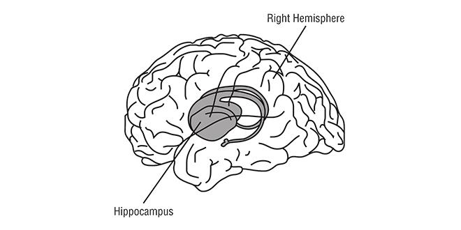 El estrés daña tu cerebro