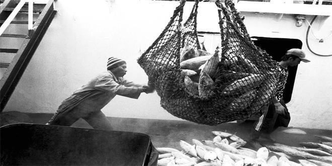 ¿Cómo sería un mundo sin peces?