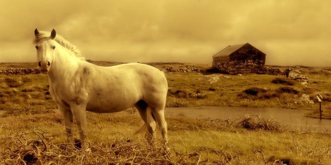 horse-928213_1280 (Copy)