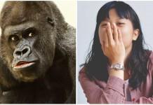 el gorila japonés