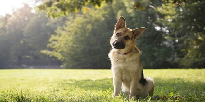 perro (Copy)