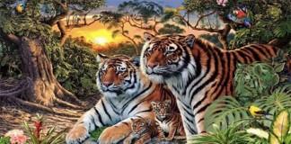 test visual tigres