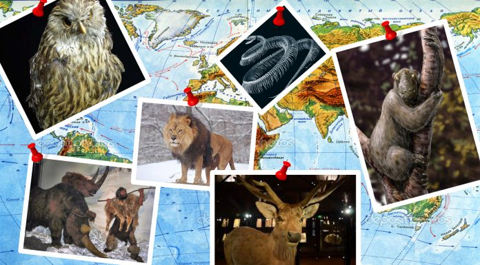 7 animales extintos que te fascinará conocer