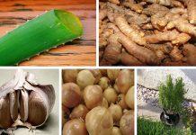 5 poderosos antibióticos naturales