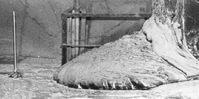 La LETAL Pata de Elefante de Chernóbil