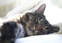 Tu gato duerme encima de ti