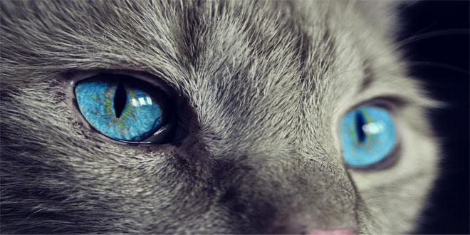 18-fascinantes-curiosidades-de-los-gatos