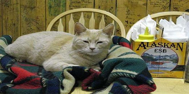 18 fascinantes curiosidades de los gatos