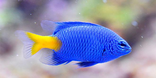 ¿cómo respiran los peces?