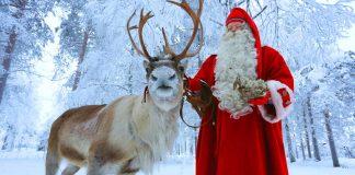 Todo lo que necesitas saber sobre los Renos de Papá Noel