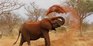 ¿Por qué los elefantes no pueden saltar? ¿Te lo has preguntado?