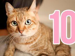 10 razones por las que los gatos son las mejores mascotas
