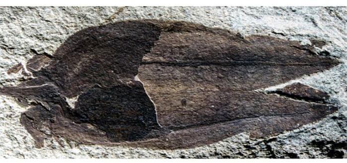 ¡Descubren el fósil de un fruto de 52 millones de años!