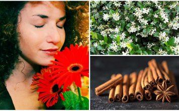 5 olores que te harán sentir mejor