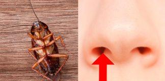 Lo sentimos, pero ha ocurrido: una cucaracha vivía en el cráneo de una mujer y entró por su nariz