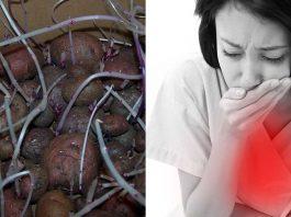 ¿Es posible intoxicarse por comer patatas verdes o germinadas?