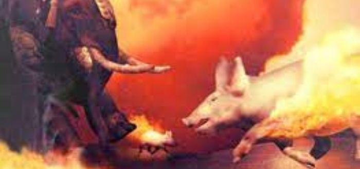 cerdos incendiados