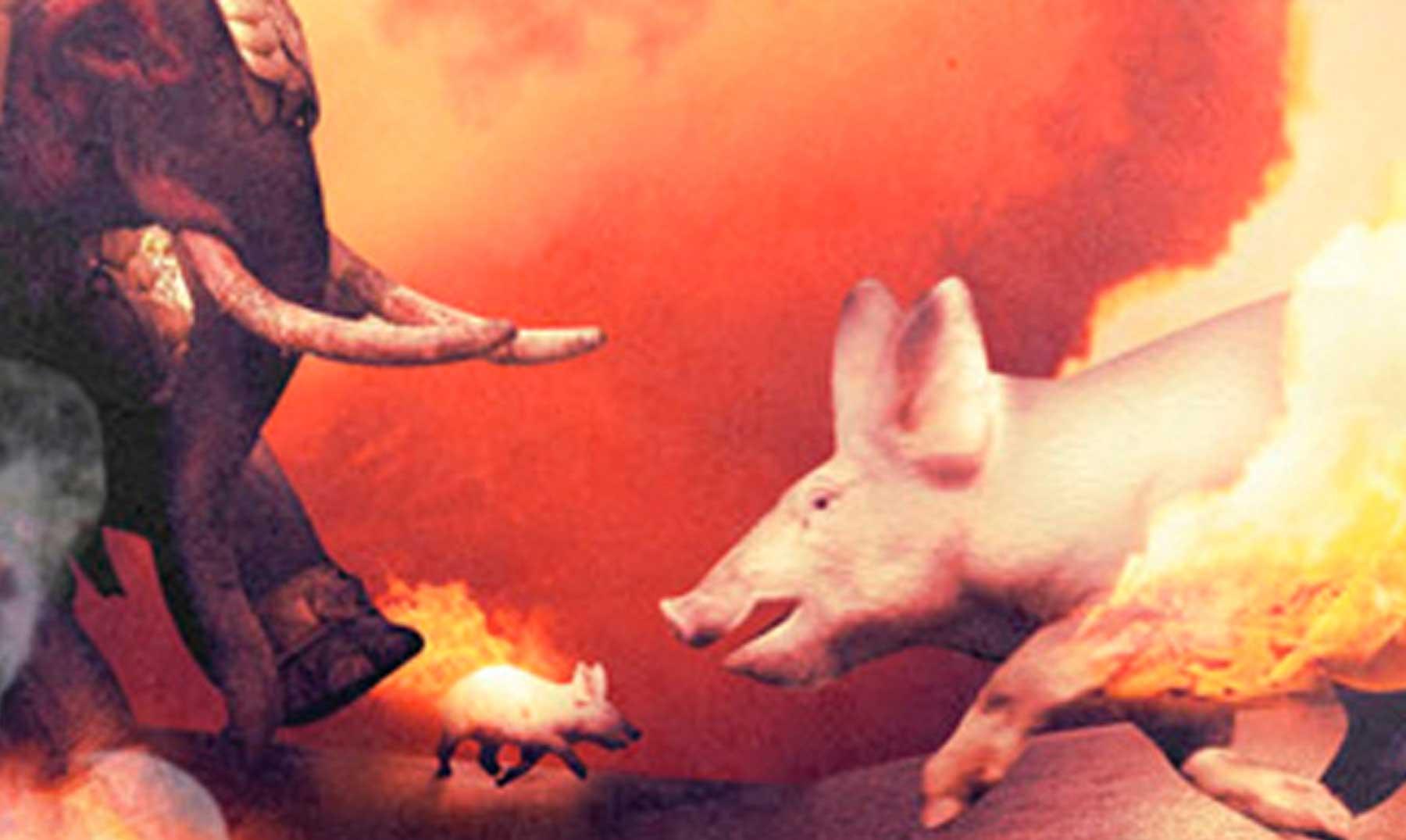 Cerdos en llamas, los antitanques de la antigüedad