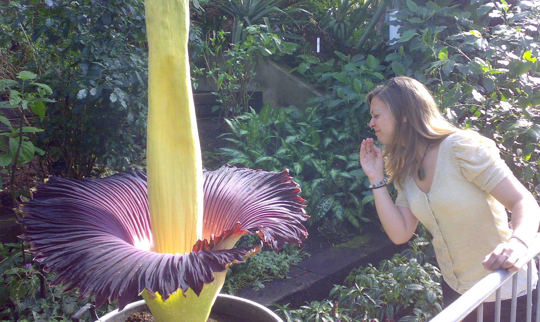 La planta con olor a cadáver