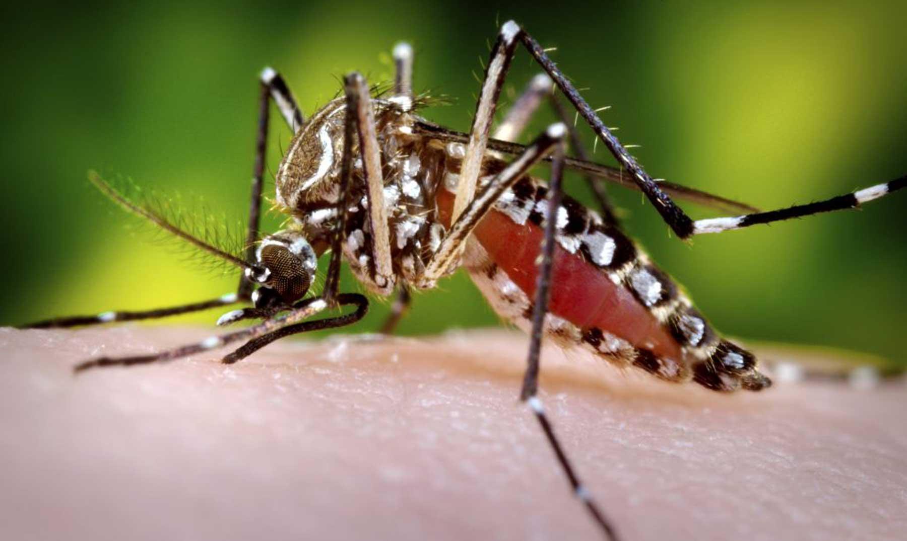 ¿Por qué a unas personas les pican más los mosquitos que a otras?