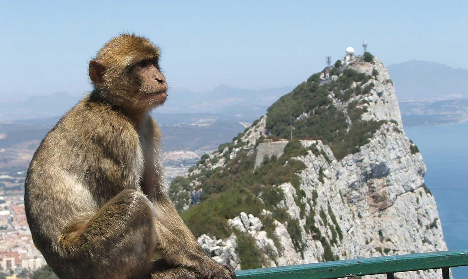¿Por qué hay monos en Gibraltar?