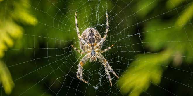 La incre ble resistencia de la tela de ara a - Como hacer tela de arana ...