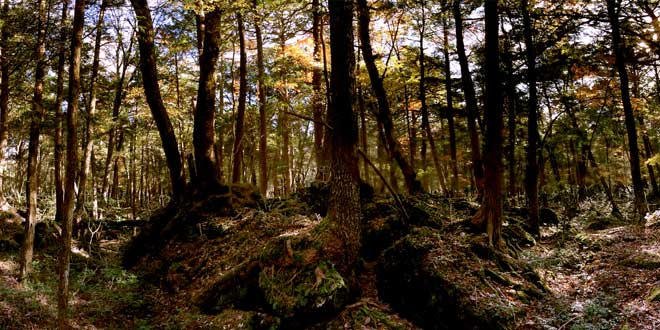 aokigahara, bosque de los suicidios japón