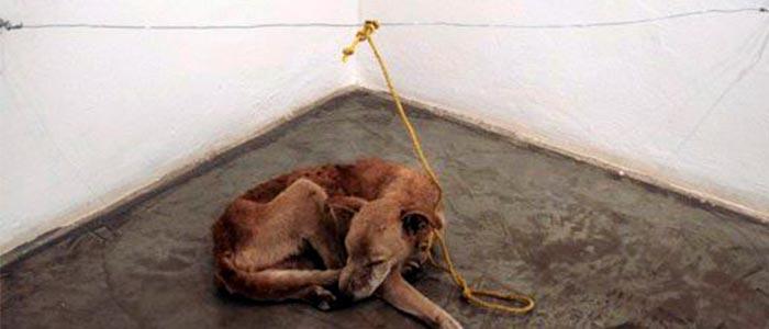 matar de hambre a un perro