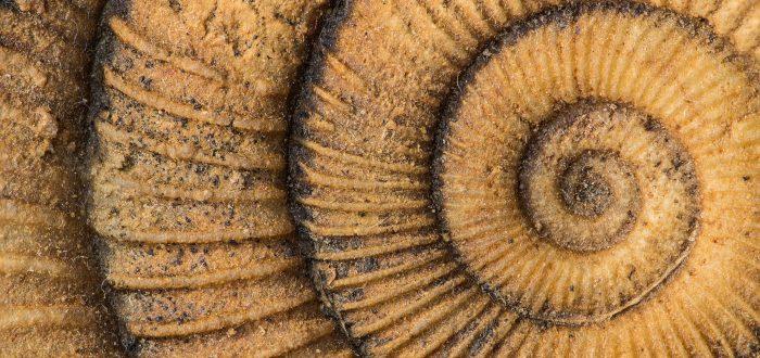 Espiral áurea
