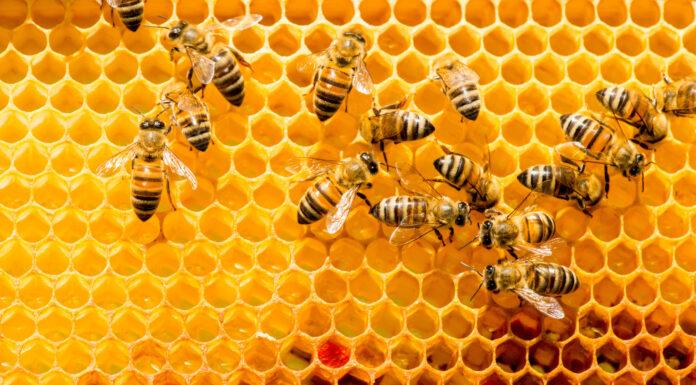 Qué pasaría si desaparecen las abejas. Se acabaría el mundo
