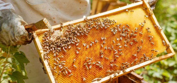 Qué pasaría si desaparecen las abejas. Se acabaría el mundo...