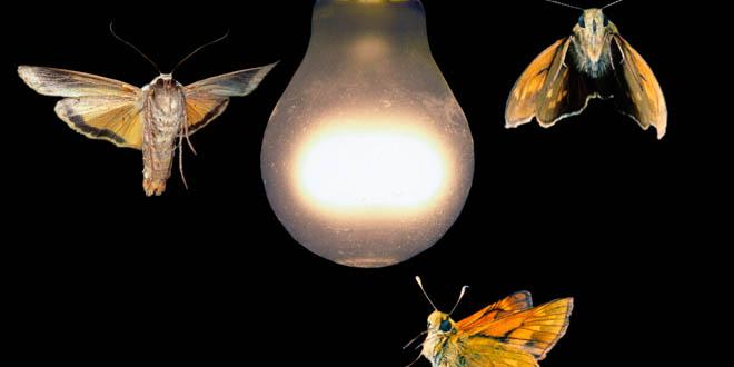 Insectos luz