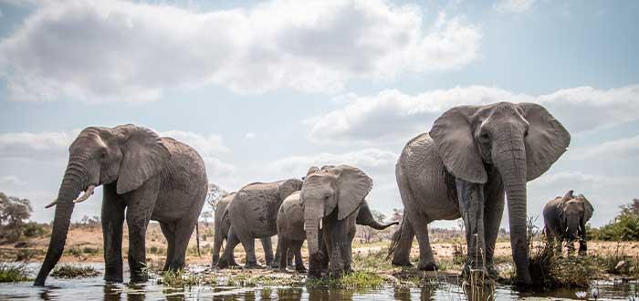 los elefantes animales mas letales
