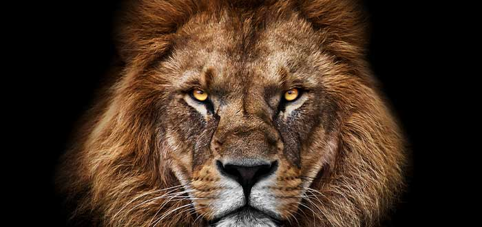 los mortiferos leones