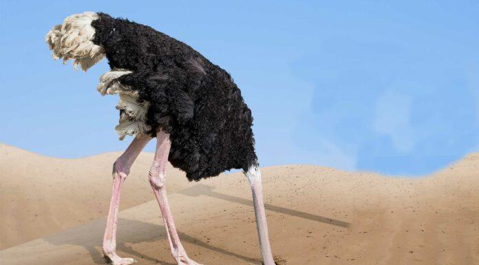 mito avestruz