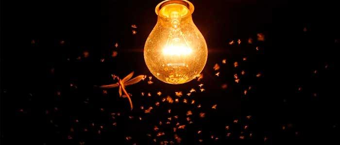 por que a los insectos les atrae la luz