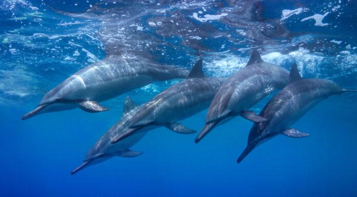 Cómo duermen los delfines _ Razones increíbles