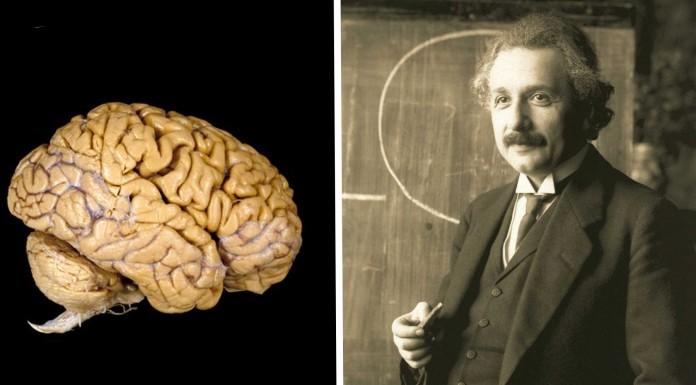 El curioso cerebro de Albert Einstein