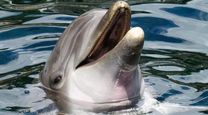 Curiosidades sobre los delfines: ¿Son tan inteligentes?