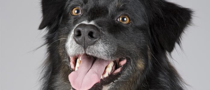 el lenguaje canino