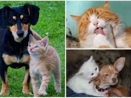 obedecen perros y gatos