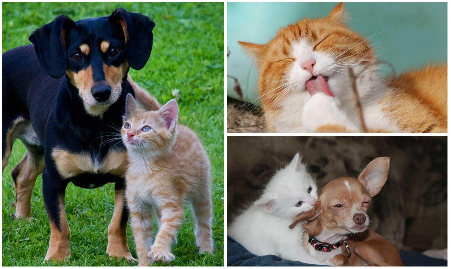 Por qué los perros obedecen y los gatos no?