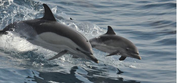 misterios de los delfines
