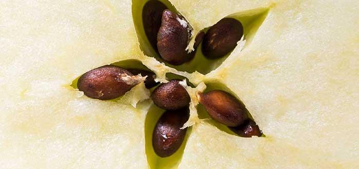 Alimentos venenosos, Semillas de Manzana