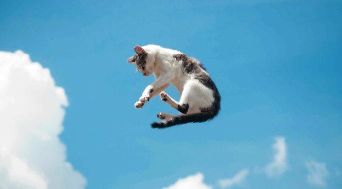 los gatos caen parados