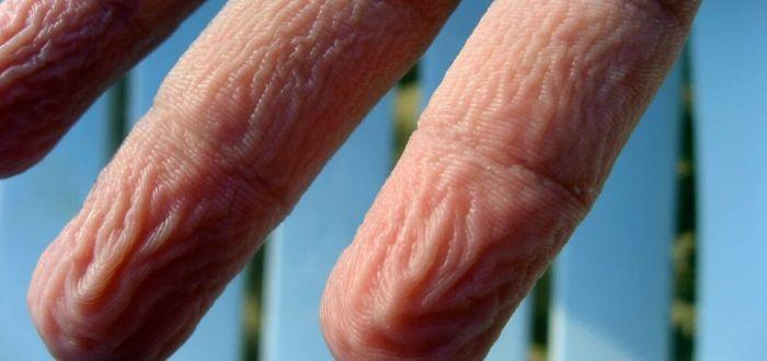 Por que se arrugan los dedos en el agua.. Descubrelo