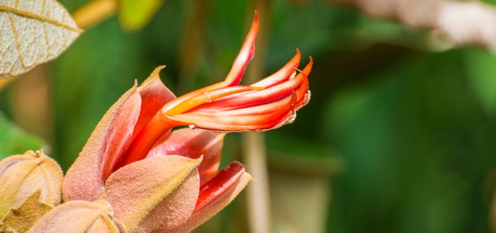 flores más raras del mundo