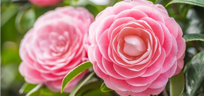 flores extrañas y hermosas